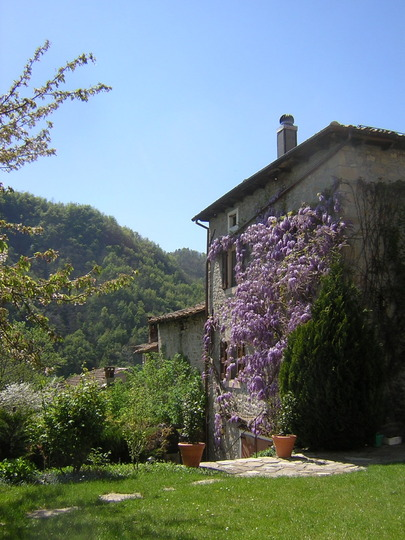 Wisteria on the East wall of the house