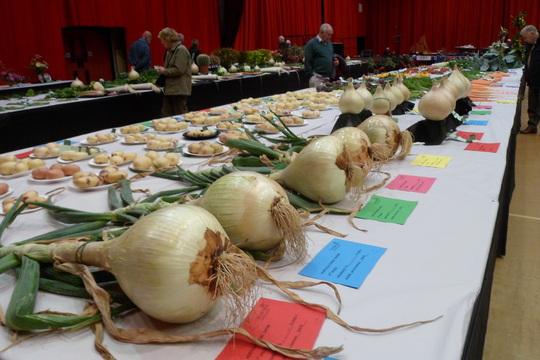 giant onions seaburn horticulture show sunderland