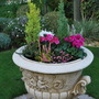 Urn planted up for winter colour.....