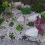 Our Mini Rock Garden
