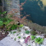 Our Mini Rock Garden 2