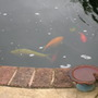 think these must be the fish well a few of them