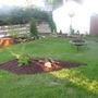 Back yard 2011