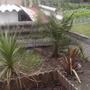Hubbies spiky corner (Cordyline australis)