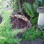 Woodland Garden continued......
