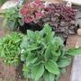 Five new perennials...50% off sale
