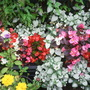 Decking plants