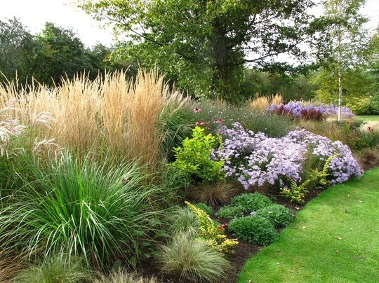 Border ideas d g daisies and grasses for Grasses for garden borders