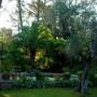 Notre_jardin_avec_le_phoenix_et_l_olivier_our_garden_with_phoenix_canariensis_and_olive_tree