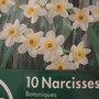 Narcisses 'Minnow'