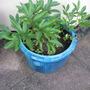 Garden_may_2008_71