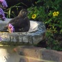 Cimg4875bird_bath