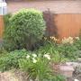 Back garden Day lillies  Astilbies Water feature
