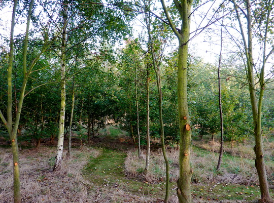 Part of My Woodland