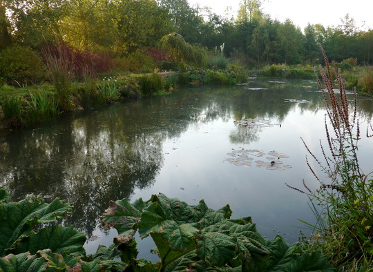 Pond in Autumn 1