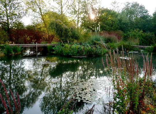 Autumn Pond 2
