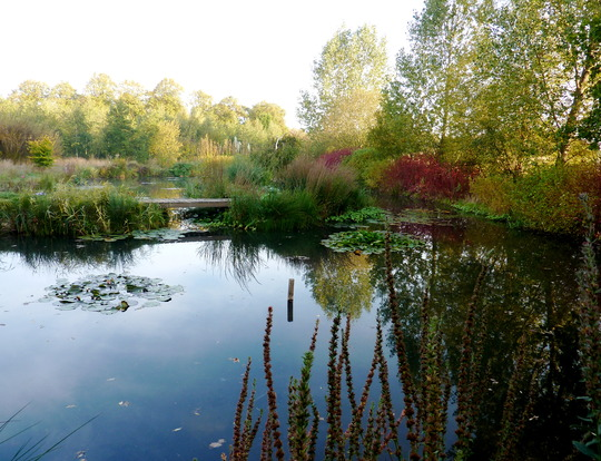 Autumn Pond 6