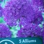 Allium...'Purple Sensation'