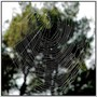 Silk thread from spider to become cloth or spider web - Fil d'araignée devenant toile
