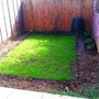 New lawn growing...