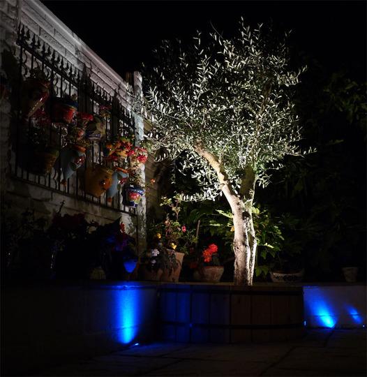 Olive Tree At Night