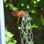 dragonfly in the sun