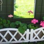 Geraniums planted in breeze blocks!