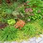 Front Garden Fall