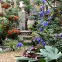My_garden_2011_614