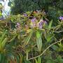 Plant_pics_10_08_11_2_