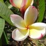 4 Petals