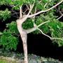 Wonder tree!