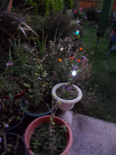 Garden at dusk 2
