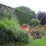 Picture 2074 Red Border Hidcote