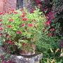 Picture 2072 Pot on Summerhouse Steps Hidcote
