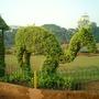 Topiary in Hanging Gardens