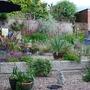 Back_garden_greening_up.jpg