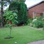Front_garden_greening_up.jpg