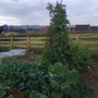 Sons & mates allotment! :-)