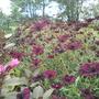Garden_vals_flowers_001