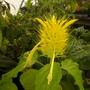 Plant_pics_10_08_11_21_