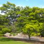 Balboa_park_10_15_11_26_