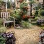 My garden 2011 647