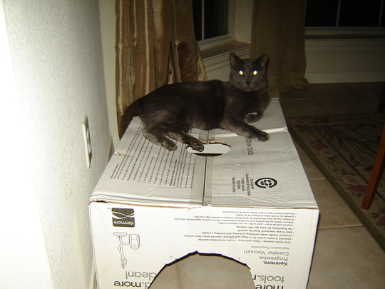 Smokey Boy and the new box