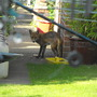 Freddie on a daylight visit.....
