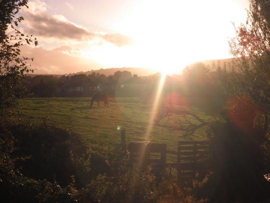 Evening horselight