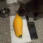 Big yellow squash