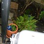Some other survivors - the fern and one of the lantanas, just don't know which yet.