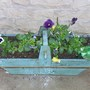 A friend who went back to her native Italy gave me this planter with a basil plant...it died tho and now I have put pansies in its place. (viola x wittrockiana)
