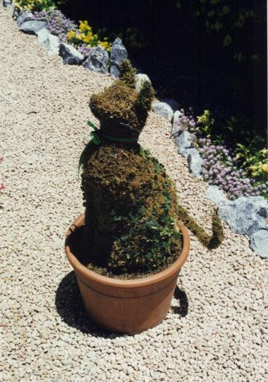 topiary felinus